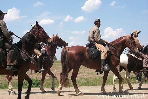 kopf schlagen pferden